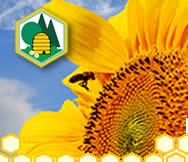 Bezirks-Bienenzuchtverein Überlingen e.V.